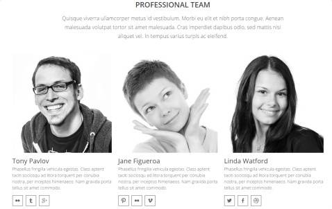 Team Members - Indigo Viva Themes