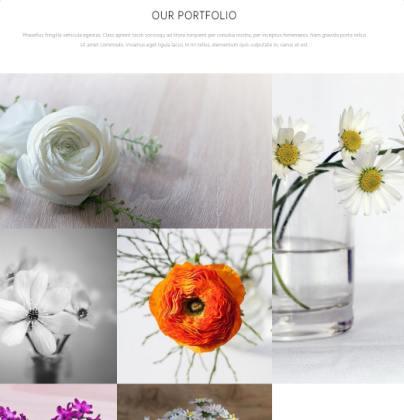 portfolio-blanche